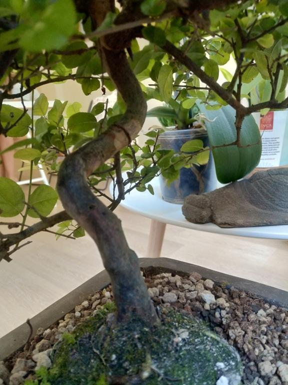 Que tipos de bonsai tengo? 15950715