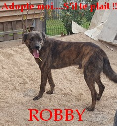 Robby11