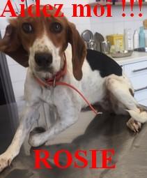 Rosie10