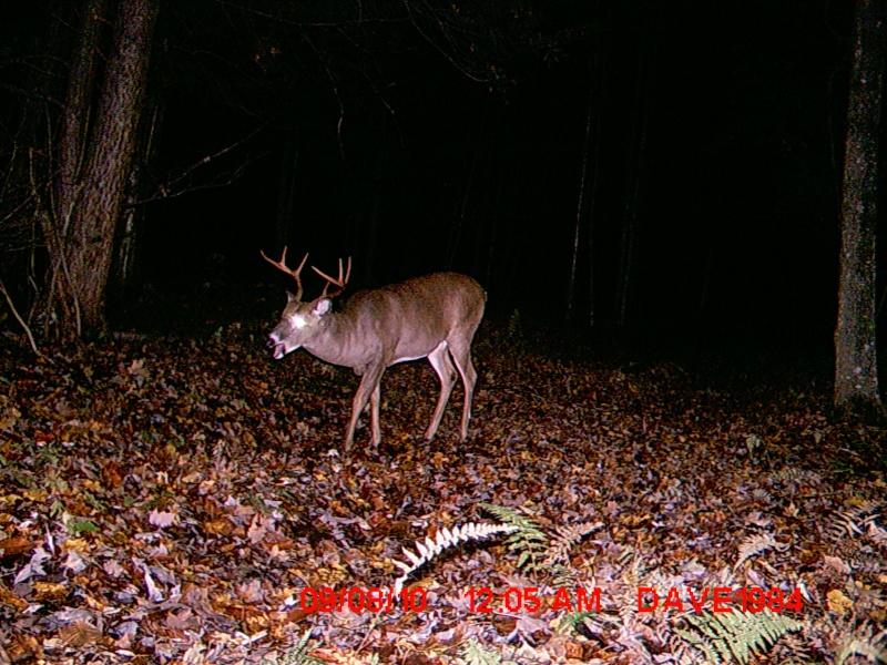 Un gros Buck Le King de mon secteur - Page 3 Spot_a17