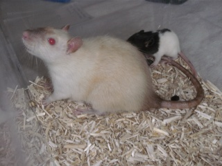 [Waterloo et Mellier (Belgique)] une trentaine de ratons à placer d'urgence - Page 2 Bild0073