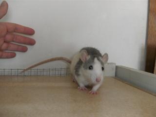 [Waterloo et Mellier (Belgique)] une trentaine de ratons à placer d'urgence - Page 2 Bild0077