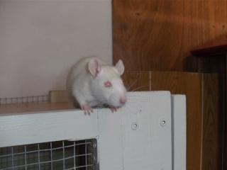 [Waterloo et Mellier (Belgique)] une trentaine de ratons à placer d'urgence - Page 2 Bild0078