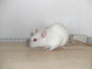 [Waterloo et Mellier (Belgique)] une trentaine de ratons à placer d'urgence - Page 2 Bild0145