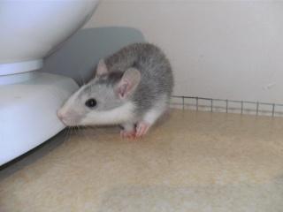 [Waterloo et Mellier (Belgique)] une trentaine de ratons à placer d'urgence - Page 2 Bild0146