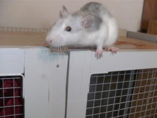 [Waterloo et Mellier (Belgique)] une trentaine de ratons à placer d'urgence - Page 2 Bild0149