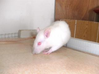 [Waterloo et Mellier (Belgique)] une trentaine de ratons à placer d'urgence - Page 2 Bild0153