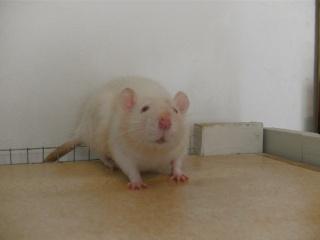 [Waterloo et Mellier (Belgique)] une trentaine de ratons à placer d'urgence - Page 2 Bild0154
