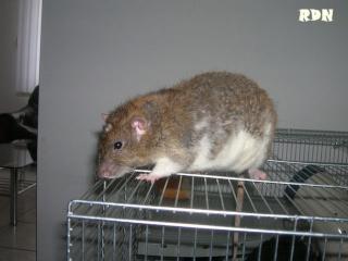 Généalogie des ratons Dscn9210