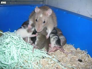 Généalogie des ratons Dscn9310