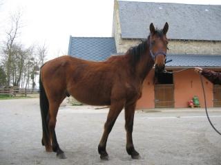 SOMBRERO DU LYS - TF né en 2006 - adopté en octobre 2009 par Marie 00210
