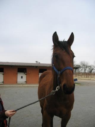 SOMBRERO - TF né en 2006 - adopté en octobre 2009 par Marie 00310