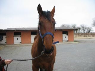SOMBRERO - TF né en 2006 - adopté en octobre 2009 par Marie 00413