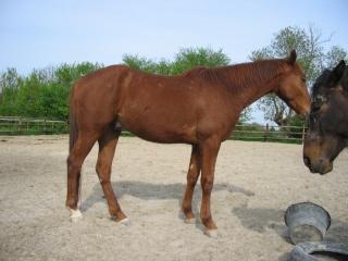 SISKO - TF né en 2007 - adopté en août 2011 par clagui 03011