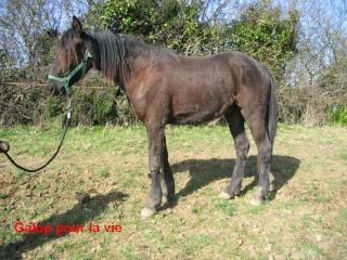 TRAPPEUR - TF né en 2007 - adopté en septembre 2009 par Antoine - Page 2 Trappe17