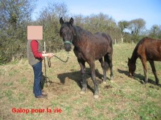 TRAPPEUR - TF né en 2007 - adopté en septembre 2009 par Antoine - Page 2 Trappe18