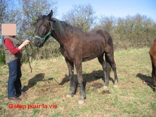 TRAPPEUR - TF né en 2007 - adopté en septembre 2009 par Antoine - Page 2 Trappe19