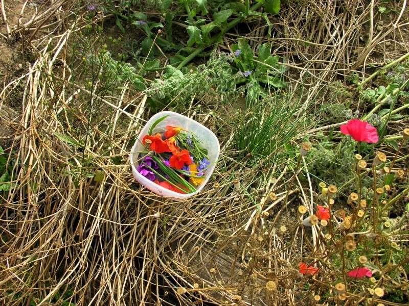 gâteaux apéritifs aux pousses de printemps 09_07_10