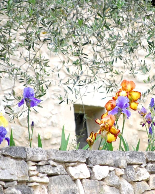 fleurs en vrac! - Page 2 2009_p15