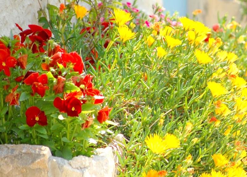 fleurs en vrac! - Page 2 Calais33