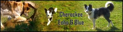 JEUX : chiens composés de chiens du fofo Sans_t70