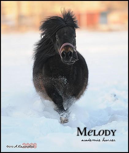 Melody - 1 500 € 09010711