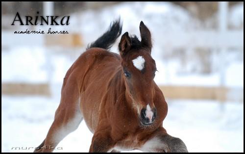 Arinka - 6 500 € 3a1010