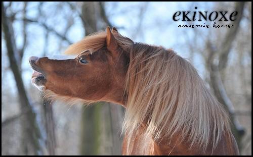 Ekinoxe - 4 000 € 9d1010