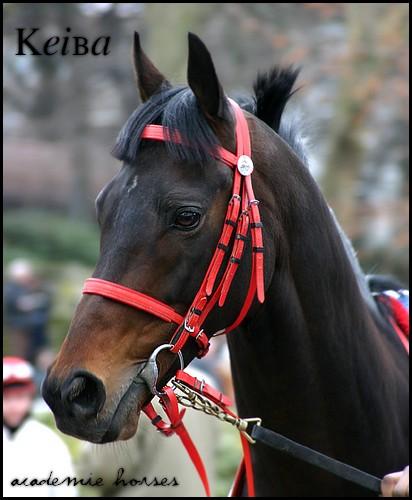 Keiba - 6 500 € Racing10
