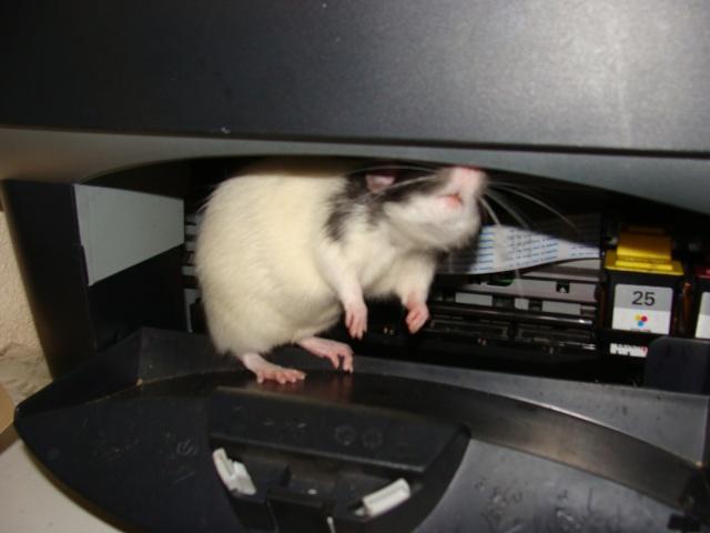 ZE post des muridés déglinguos.................... des rats! 363_0511