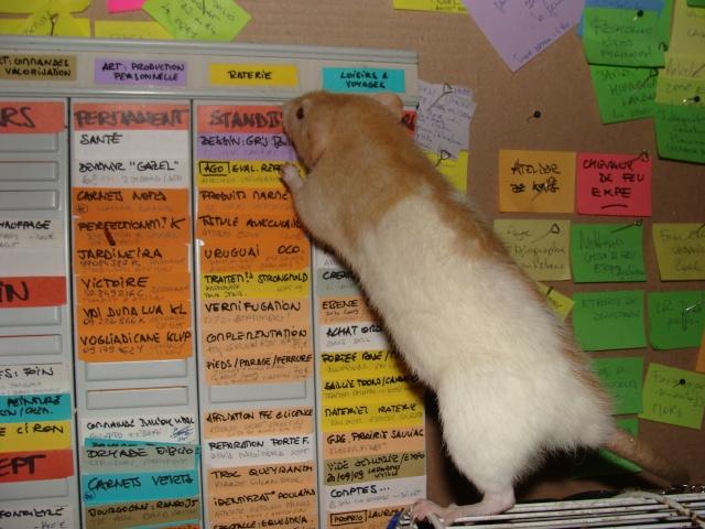 ZE post des muridés déglinguos.................... des rats! 363_0612