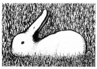 Images droles/Blagues... - Page 4 Lapin10