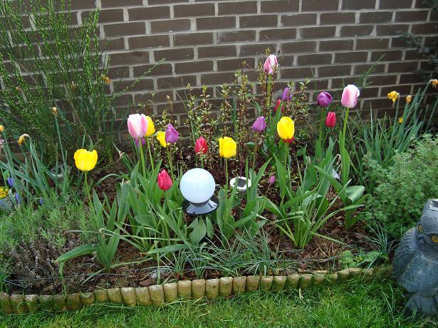 Des nouvelles de mon jardin Dsc00428