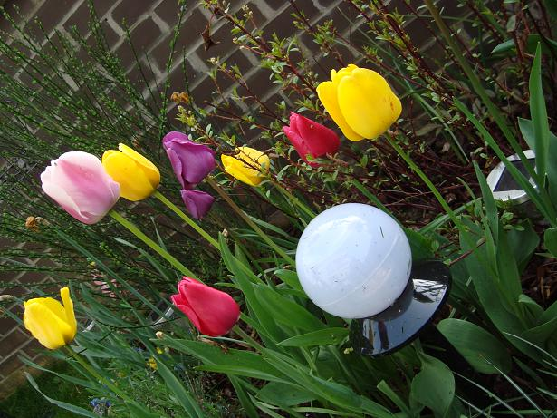 Des nouvelles de mon jardin Dsc00430