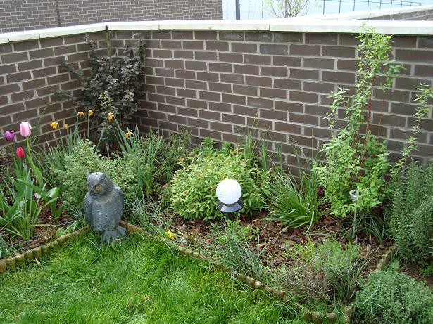 Des nouvelles de mon jardin Dsc00431