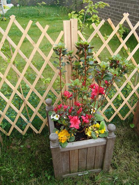 Des nouvelles de mon jardin Dsc00432