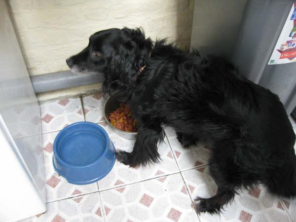 aidez un pauvre chien de 13 ans  battu et enfermé à Tourcoing 13_ans10