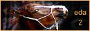 Equestra Dream Academy Loool10