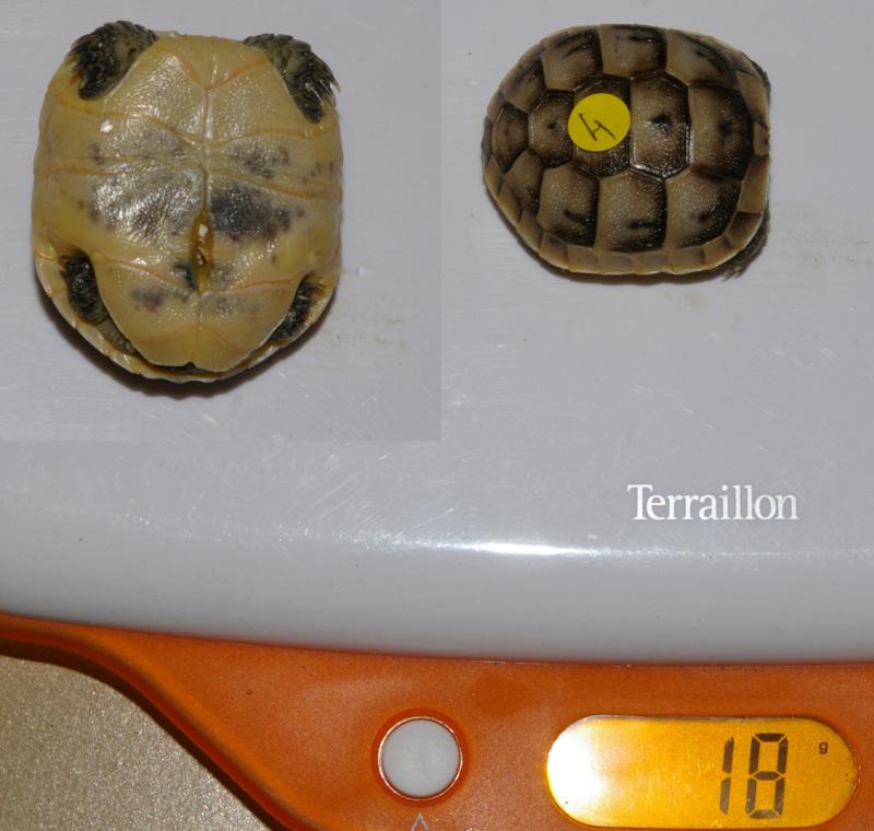 Aide identification Ibera-12