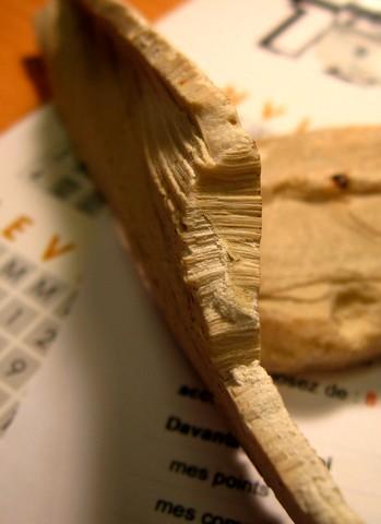 [Pinnigena sp.] fossile à identifier Img_6010