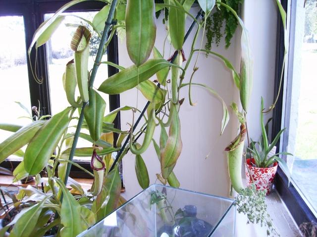 le monde des plantes pres de l ulg Hpim2319