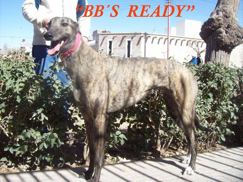BB`s READY (NUEVA REPRODUCTORA STUD VALLENAR - MENDOZA) Ready_13