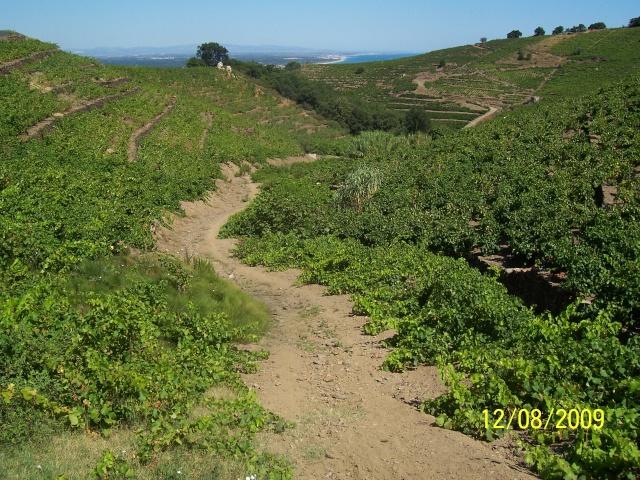 La Mar y Monts, Argeles sur Mer le 12 Août 2009 100_4045