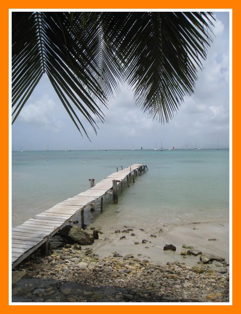 Iule de Martinique 04110