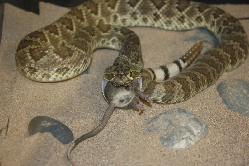 New snake (a little pic heavy) Img_2710