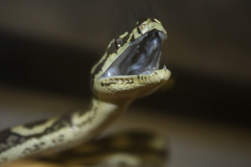 New snake (a little pic heavy) Img_2812