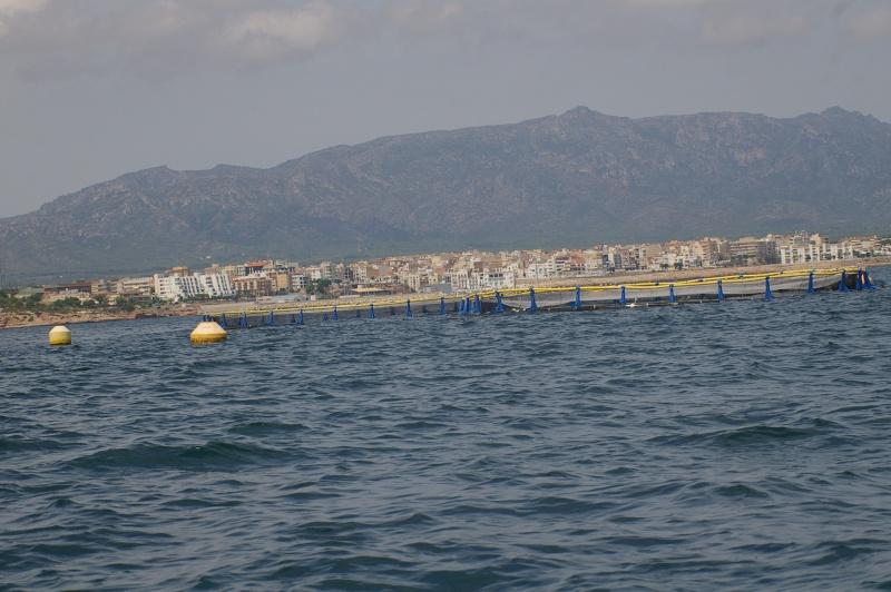 La pêche au thon rouge: tonnara, almadraba, mattanza et tutti quanti... Imgp2711