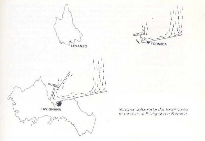 La pêche au thon rouge: tonnara, almadraba, mattanza et tutti quanti... Matanz11