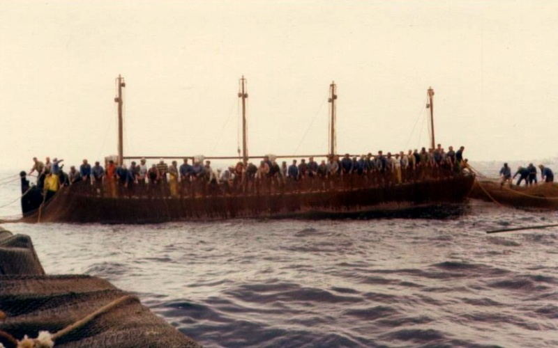 La pêche au thon rouge: tonnara, almadraba, mattanza et tutti quanti... Matenz10