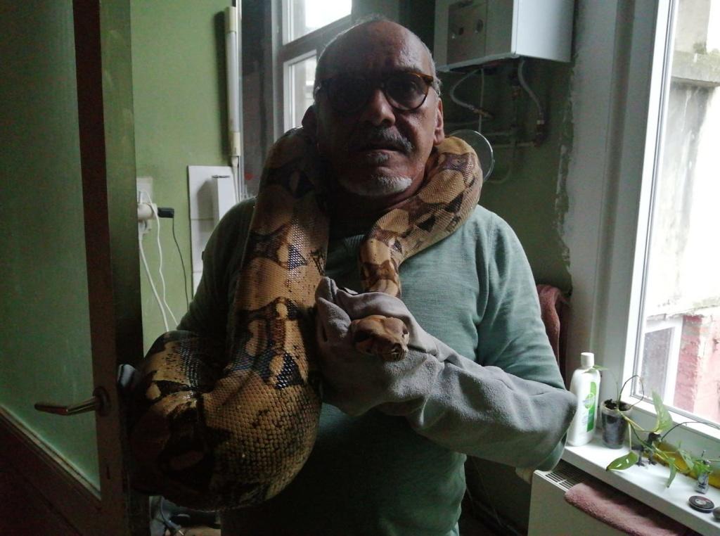 Mes pythons bivittatus et boa imperator, mes protégés 72678311